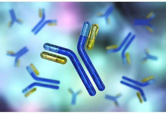Как да си набавите пробиотици Bifidobacterium и защо са полезни